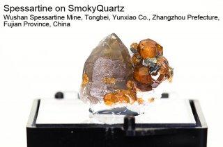スペッサルティンonスモークークォーツ 結晶 チャイナ産 Spessartine ガーネット Wushan Spessartine Mine, Fujian China 満礬柘榴石 