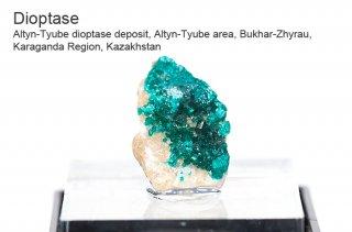 ダイオプテーズ 結晶石 カザフスタン産|Altyn-Tyube dioptase deposit, Kazakhstan|Dioptase|翠銅鉱|