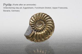 パイライト 化石 ドイツ産 アンモナイトパイライト Pyrite after an ammonite  Germany 黄鉄鉱 