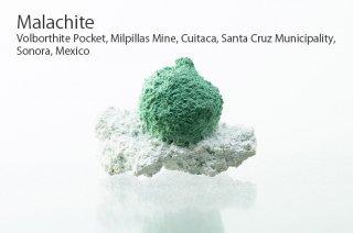 マラカイト 結晶 メキシコ産|Malachite|Milpillas Mine, Cuitaca, Santa Cruz Municipality, Sonora, Mexico|孔雀石|