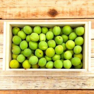 (冷蔵)フタ付き粗仕上げ訳あり木箱入り青梅(豊後梅)サイズ中玉以上混合約7kg