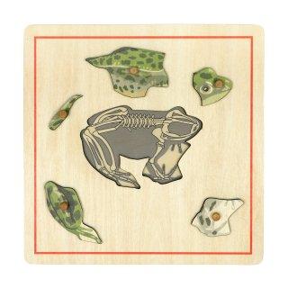 スケルトンのパズル(蛙)