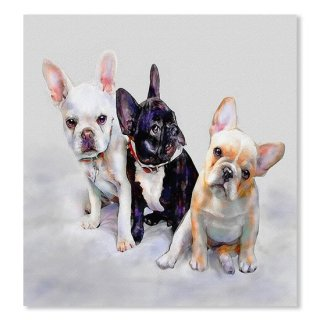 Three Frenchie Puppies