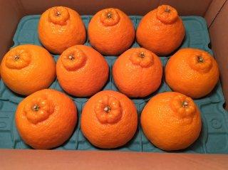 高級柑橘デコポン お試しセット(8〜12玉)