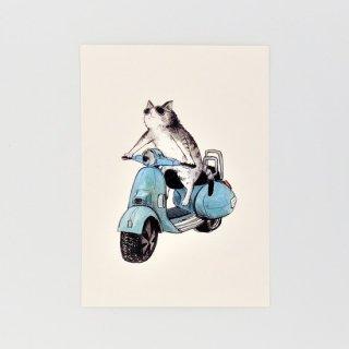 黒山 Vespa Cat Print