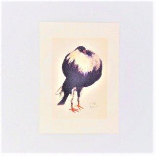 黒山 Weird Pigeon Print