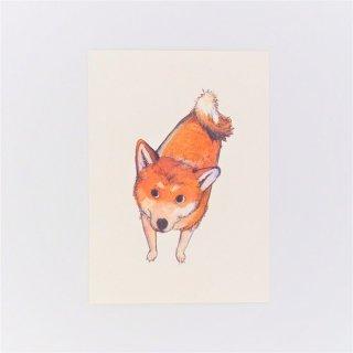 黒山 Shiba Dog Print
