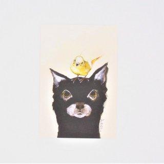 GURIPOPO ポストカード ネコ