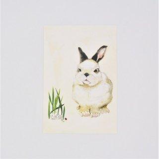 GURIPOPO ポストカード てんとう虫ウサギ
