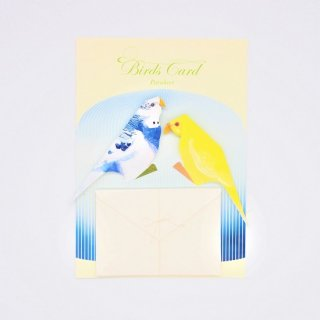 菊地絢女 BIRD CARD セキセイインコB
