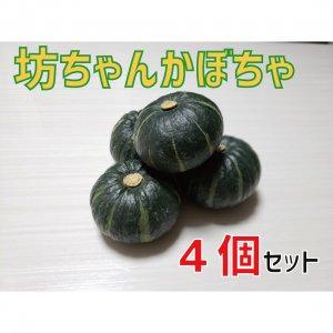 【予約販売】坊ちゃんかぼちゃ 3個 -10月以降順次発送-