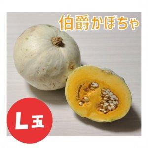【予約販売】伯爵かぼちゃ L玉 1個 -11月以降順次発送-