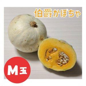 【予約販売】伯爵かぼちゃ M玉 1個 -11月以降順次発送-
