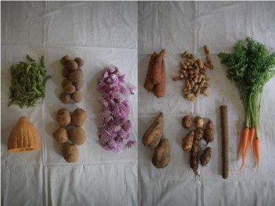 古来種野菜セット3回分 (10〜12種類)