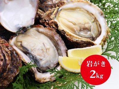 青海島特産の新鮮岩がき「2キロ」