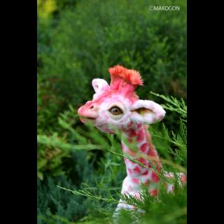 キリン / Flamingo