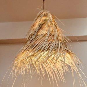 水草ランプ