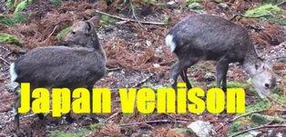 japan venison.shop