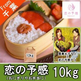 【O-F3 恋の予感 精米 10kg】女性活躍推進経営体100選 農業女子 食べてみたいお米