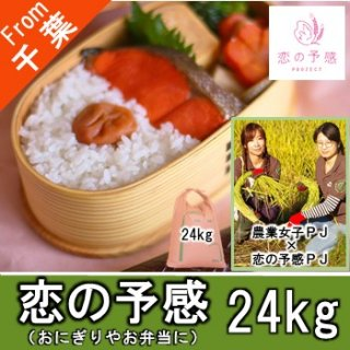 【O-F4 恋の予感 精米 24kg】おにぎり お弁当 農業女子 農家 業務用