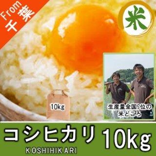 【O-D3 コシヒカリ 精米 10kg】 普段使いの米 千葉県