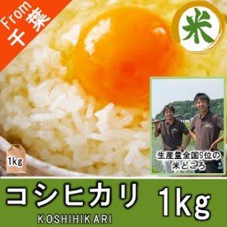 【O-D1 コシヒカリ 精米 1kg】 お米 値段 ちばのお米