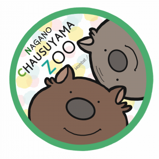 茶臼山動物園 ウォンバットステッカー 【スマートレター対応商品・3,500円以上送料無料対象商品】