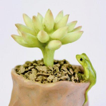 樹脂多肉植物とのぞきカエル