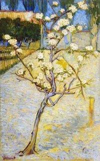 花咲く西洋梨の木