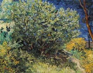 ライラックの茂み