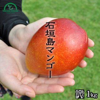 石垣島マンゴー ときわ農園 訳ありマンゴー商品画像 1キロ