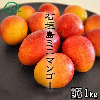 石垣島ミニマンゴー ときわ農園 ミニマンゴー商品画像 1キロ