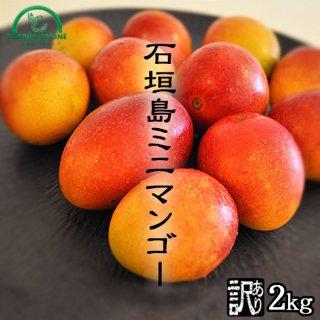 石垣島ミニマンゴー ときわ農園 ミニマンゴー商品画像 2キロ