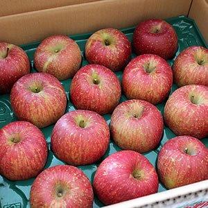 海洋深層水栽培りんご10kg