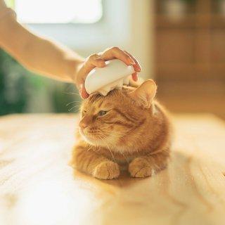 猫用ブラシ/被毛クリーニング