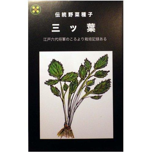 浜名農園 / 伝統野菜種子 三ツ葉