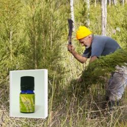 2019年6月産 NASAA認証オーガニック 豪州奥地に生育する最古のティーツリー原種を母木に抽出したブッシュオイル 希少 ティーツリー精油 5ml  (メール便可)