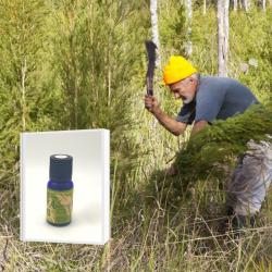 2019年6月産 NASAA認証オーガニック 豪州奥地に生育する最古のティーツリー原種を母木に抽出したブッシュオイル 希少 ティーツリー精油 10ml(メール便可)