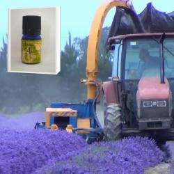 2019年産 一大プロジェクトから生まれた高品質で安全性の高い 無農薬ニュージーランド真正ラベンダー精油 5ml (メール便可)