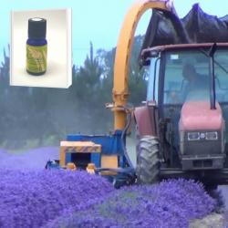 2019年産 一大プロジェクトから生まれた高品質で安全性の高い 無農薬ニュージーランド真正ラベンダー精油 10ml (メール便可)