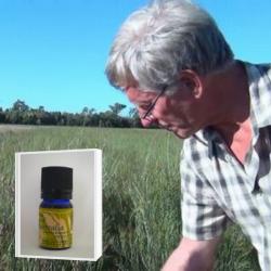 2019年11月産 優しい甘さのある爽やかなレモン系の香り  アロマ香水に 無農薬ハニーマートル精油5ml (メール便可)