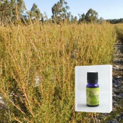 2019年12月産 爽やかさと甘さの香り成分の調和に魅せられる アロマ香水に 無農薬フラゴニア精油10ml  ( メール便可)