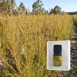 2019年12月産 爽やかさと甘さの香り成分の調和に魅せられる アロマ香水に 無農薬フラゴニア精油5ml  ( メール便可)