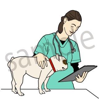 獣医の女性 イラスト(ペット、犬、病院、治療)