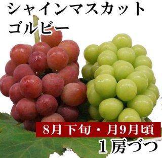 シャインマスカット・ゴルビー【各1房ずつ】