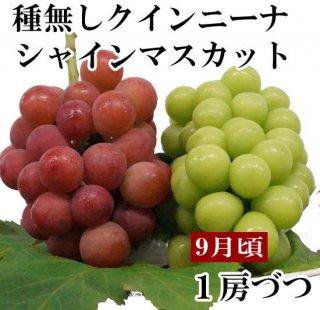 シャインマスカット・クイーンニーナ【各1房ずつ】
