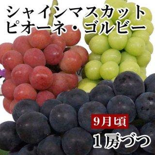 シャインマスカット・ピオーネ・ゴルビーギフト【1房ずつ】