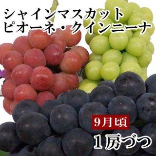 シャインマスカット・ピオーネ・クイーンニーナギフト【1房ずつ】