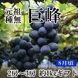 【クール便】元祖葡萄の王様 種無し巨峰 1Kギフト