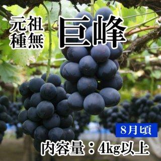 【クール便】元祖葡萄の王様 種無し巨峰(8房〜9房)約4Kギフト